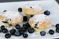 Three blueberry muffins with powdered sugar on slate dark Royalty Free Stock Images