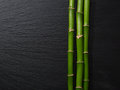 Three branches of bamboo.