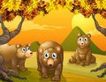 Three brown bears illustration of the Stock Photos