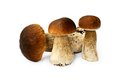 Three brown edible boletuses on white raw Royalty Free Stock Photo