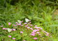 Three butterflys butterfly pink red flowers green field spring vibrant poetic Royalty Free Stock Image