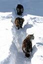 Three cats running through the snow