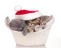Three cats sleeping on christmas Royalty Free Stock Image