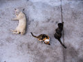 Three Cats in Three Posture Royalty Free Stock Photo