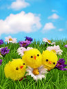 Three cheerful chicks on a row Stock Images