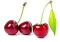 Three cherries with leaf closeup isolated on white background Royalty Free Stock Photo