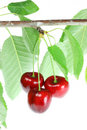 Three cherries with leafs. Royalty Free Stock Photos