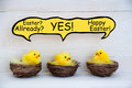 Three chicks with speech balloon and easter joke sitting in baskets or nest yellow feathers on white wooden background comic Royalty Free Stock Photos
