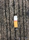 Three cigarettes butts on the ground Royalty Free Stock Photo