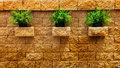 Three clump of green grass on the brick wall out door shot park Royalty Free Stock Photo