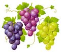 Three cluster of grapes Stock Photography