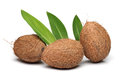 Three Coconut Royalty Free Stock Photography