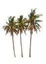 Three coconut palm trees Royalty Free Stock Photo