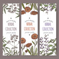 Three color vector herbal tea labels with valerian, calendula, sage. Royalty Free Stock Photo