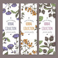Three color vector labels with burdock, chicory, saint john wort