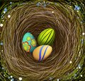 Three colored Easter s eggs in the nest with hay, decorated with blue and white flowers, Easter composition, Royalty Free Stock Photo