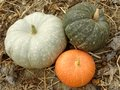 Three colorful pumpkins Royalty Free Stock Photo