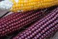 Three colors corn cobs Royalty Free Stock Photo