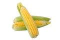 Three Corn  On A White Backgro...