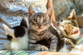Three cute kittens Royalty Free Stock Photo