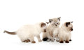 Three cute kittens on white Stock Photography