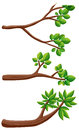 Three different kinds of branches