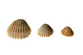 Three differents shell from ocean Stock Photos