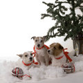 Three dogs Stock Photos