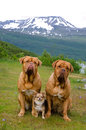 Three dogs against Norwegian landscape Stock Photos