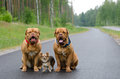 Three dogs sitting on a road Royalty Free Stock Images