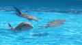 Three Dolphins happy inside water Royalty Free Stock Photo