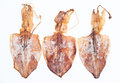 Three dried octopus on white background Stock Photo