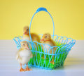 Three ducklings with a basket two in one standing beside it Royalty Free Stock Images