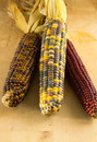 Three of ears of indian corn close up on a wooden background Stock Images