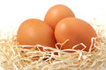 Three easter eggs in the nest Stock Photography