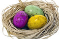 Three Easter eggs in a nest. Royalty Free Stock Photography