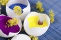 Three Egg Shells As A Happy Ea...