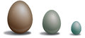 Three eggs bird in different sizes and colors Stock Photos