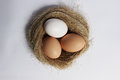 Three eggs in a nest Royalty Free Stock Photo