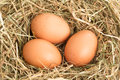 Three eggs nestled straw nest Stock Photo