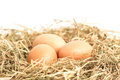 Three eggs nestled straw white background Stock Photos