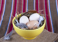 Three eggs straw yellow plate Stock Images