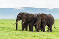 Three elephants Royalty Free Stock Photo