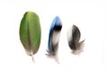 Three feathers on white isolated the background Royalty Free Stock Photography