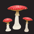Three fly agaric mushrooms isolated on black background. Vector Illustration