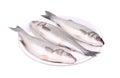 Three fresh seabass fish on plate. Royalty Free Stock Photo