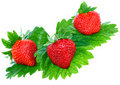 Three fresh strawberries. Isolated Royalty Free Stock Photography