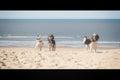 Three friends on the beach. Royalty Free Stock Photo