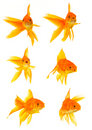Three goldfishes Royalty Free Stock Photography