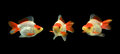 Three goldfishes on black background Royalty Free Stock Photography